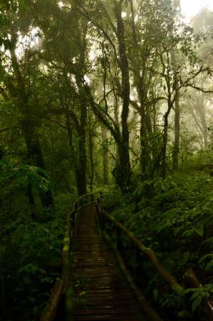 doi: Ancient forest at Doi Inthanon.