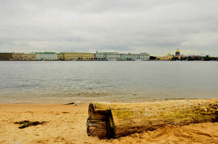 Dry wood of the sea in St. Petersburg. photo