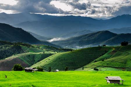 environmen: Rice Fields at Maechaem in Thailand