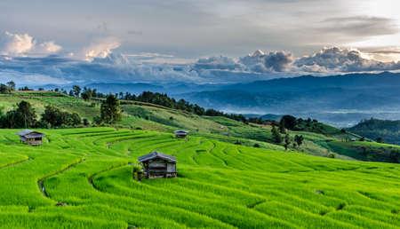 タイの Maechaem を水田します。 写真素材