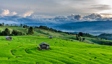 Rice Fields at Maechaem in Thailand