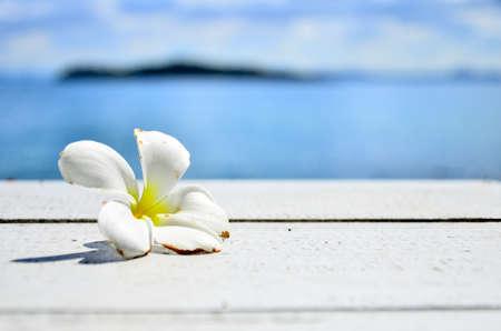 白いテーブルにプルメリアの花