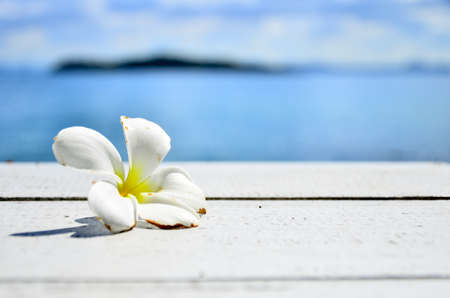 Plumeria flowers on a white table  photo