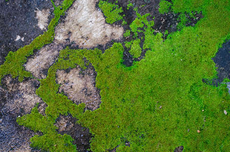 Moss growing on the concrete floor  photo