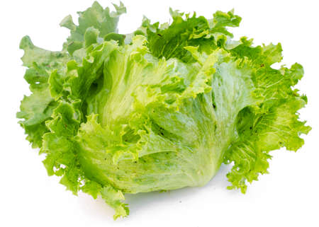 Green Iceberg lettuce on White Background   photo