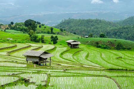 chaingmai: Terraced Paddy Field in Mae-Jam Village , Chaingmai Province , Thailand Stock Photo
