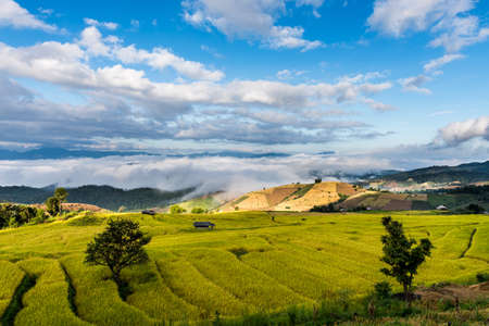 Terraced rice fields in northern Thailand ,Pa pong peang, Chiang Mai photo