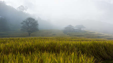 Terraced rice fields with fog in the morning at northern Thailand ,Pa pong peang, Chiang Mai photo