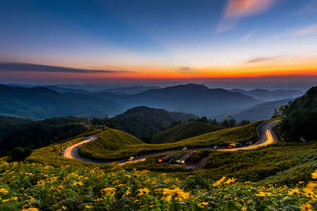 Landscape sunset nature flower Tung Bua Tong, Mexican sunflower weed valley in Maehongson Province, Thailand. photo