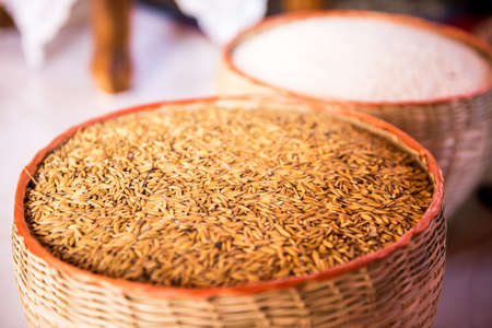 paddy rice and rice Stock Photo