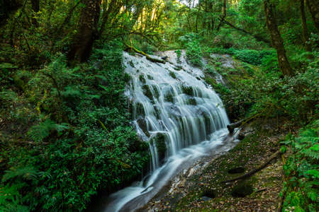 evergreen forest: Waterfall in hill evergreen forest of Doi Inthanon, Chiang Mai, Thailand