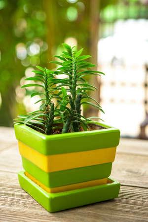 plant pots: green plant pots decoration on wooden table Stock Photo