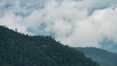 dense: Morning fog in dense tropical rainforest, Misty mountain forest fog