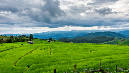 chaingmai: Terraced Paddy Field in Mae-Jam Village , Chaingmai Province , Thailand Stock Photo