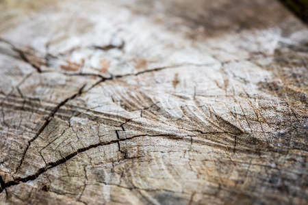 cutoff: texture of wood cut-off for the background