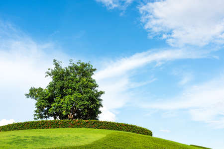 grassy knoll: One tree on a grassy knoll with blue sky