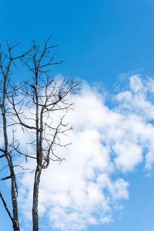 sky brunch: A dry brunch of tree against blue sky