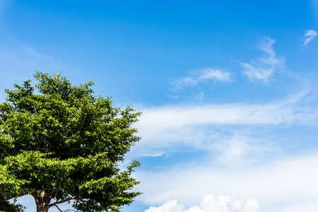 tronco: árbol y cielo azul Foto de archivo