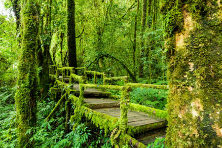 chaingmai: Rainforest at Inthanon Mountain, Chiang Mai, Thailand Stock Photo