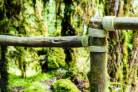 primeval forest: Old wooden block with a rope for passage in the primeval forest in Doi inthanon Chiang Mai Thailand Stock Photo