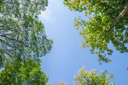 blue summer sky: spring landscape of trees against the sky Stock Photo
