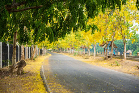 fistula: Cassia fistula flower and the road in countryside Stock Photo