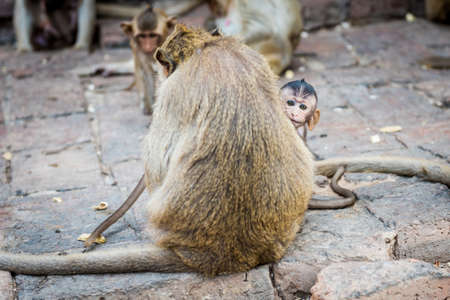 somnolent: Mother and baby monkeys