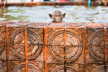 somnolent: baby monkeys are playing water Stock Photo