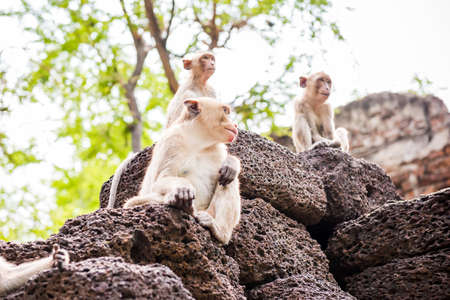 somnolent: monkey family Stock Photo