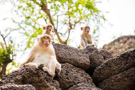monkey family Stock Photo