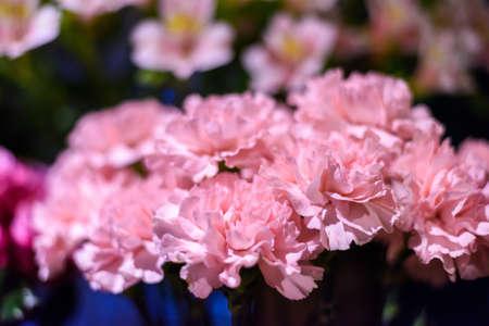 Pink carnation plastic flowers bouquet soft focus stock photo pink carnation plastic flowers bouquet soft focus stock photo 84498182 mightylinksfo