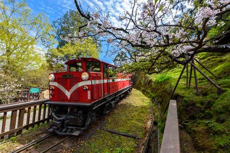 Alishan bos trein in Alishan National Scenic Area tijdens het lente seizoen. (focus bloem) Redactioneel