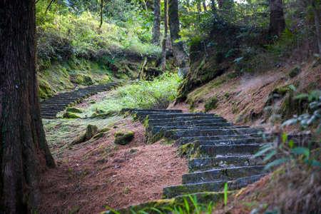 View of natural park with tall preserved tress. Stone steps walkways in the park at Alishan, Taiwan. Editorial