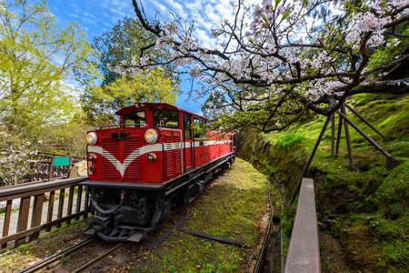 Alishan 포리스트 기차 Alishan 국립 관광 지역에서 봄 시즌 동안. (포커스가 꽃)