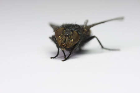 inconvenient: fly Stock Photo