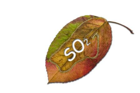 sulfur: sulfur dioxide