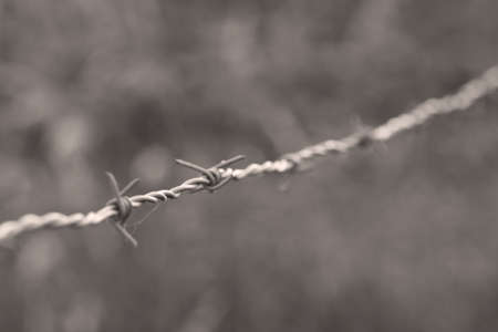 barb wire Stock Photo - 8442580