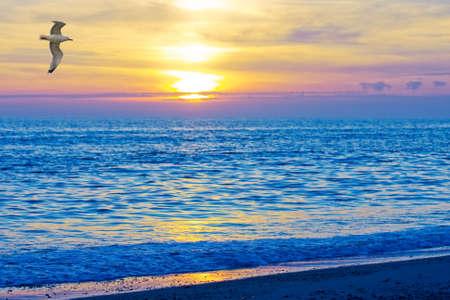 water bird: sunset
