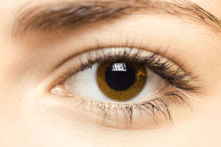 close up eye: marrone degli occhi