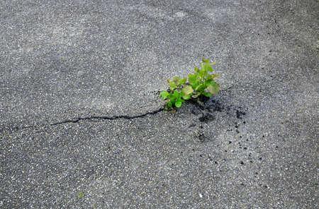 plant break through the asphalt