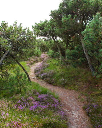 Sommer: hiking trail