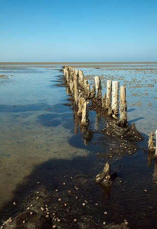the wadden sea: detail of wooden breakwater at the wadden sea