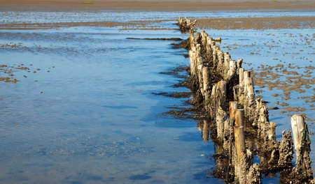 the wadden sea: old wooden breakwater at the wadden sea Stock Photo