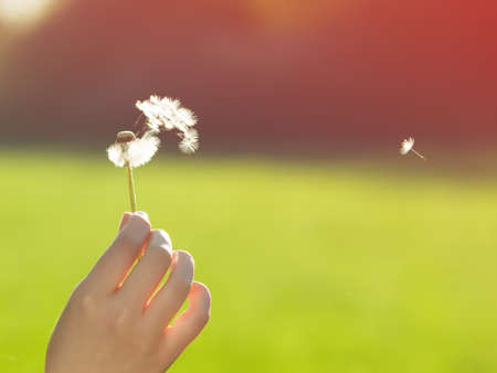 woman holding dandelion in her hand