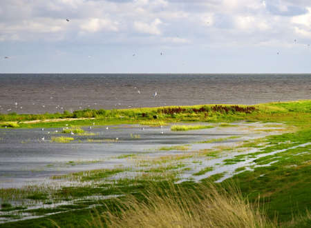 the wadden sea: Danish wadden sea national park