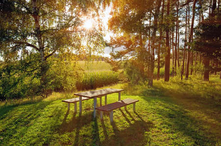 forest with picnic table and benches