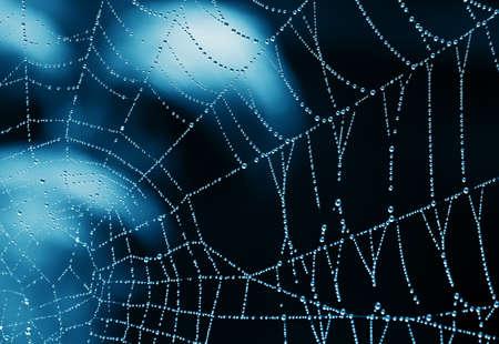 水の滴をクモの巣