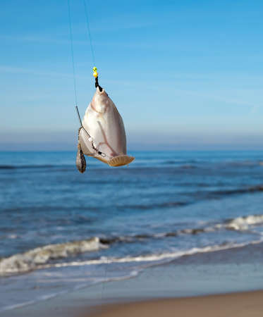 sea fishing: plaice on fishing rod with blue sea on background Stock Photo