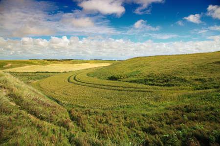 danish: danish summer landscape on a sunny day