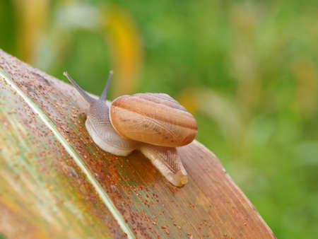 divertive snail on leaf Stock Photo - 24562700